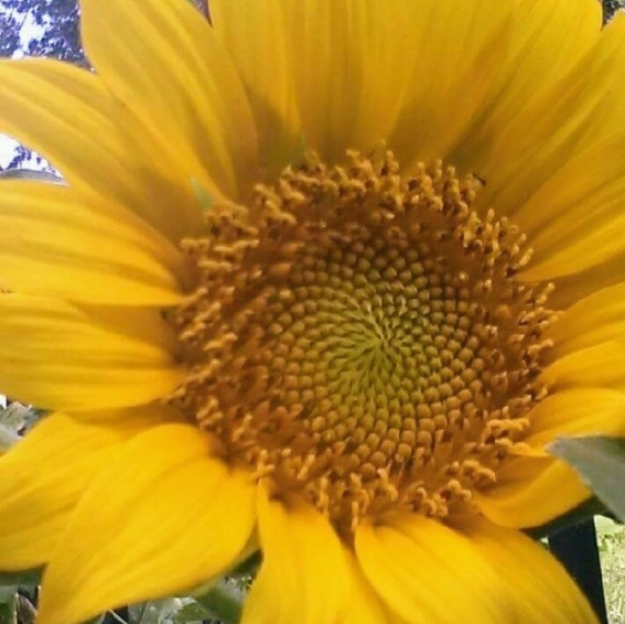 cropped-fb_img_1499439250320_signature1