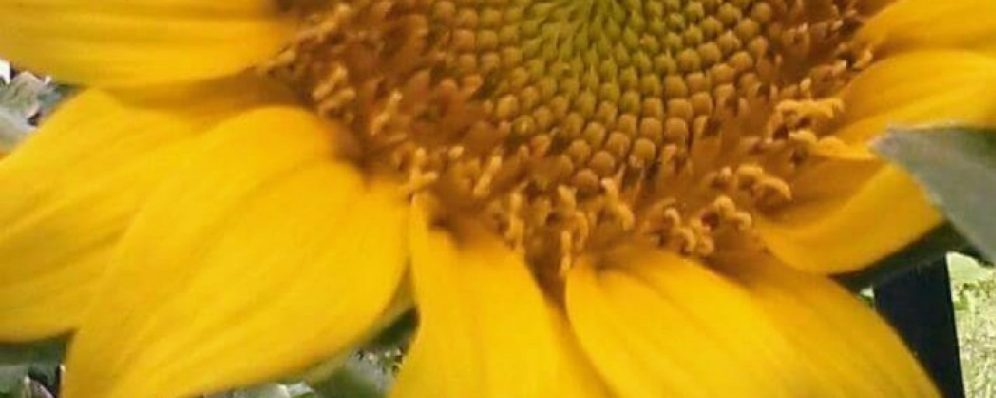 cropped-fb_img_1499439250320_signature11.jpg